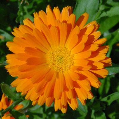 mój ulubiony kwiatek